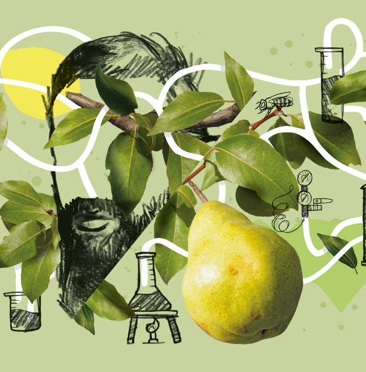 the cider lab design